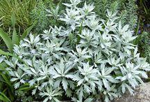 Grey green garden
