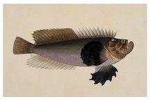 Chinese fish album / Chinese fish album postcards
