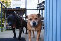 My puppies.