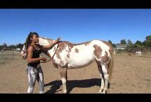 Horses - Teaching & Learning Together