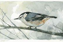 Vögel Malen
