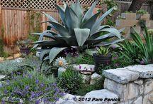 Texas Garden