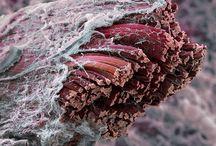microcosmos & Biologie