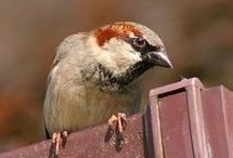 Bird Repellents / Keep your garden, fences and windowsills clear of pigeons and other birds.