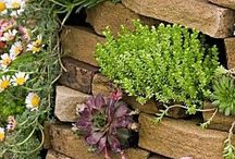 vet plant ideas