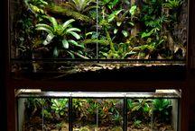 Chameleon Aquariums