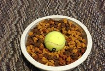 Life Hacks for Pet Owners / Make life with your favorite ball of fluff a little easier. / by Central Oklahoma Humane Society