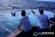Parranda 11-1-13 / Monday Parranda Sport Fishing Album!