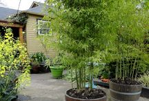 Holzfass Bambus