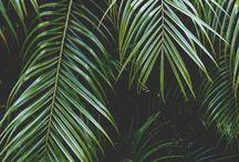 // MANAROLA // Inspiration végétation