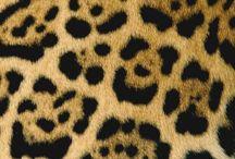 Wildlife patterns