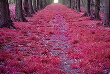 Nature (beauty)