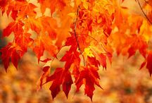Great Trees for Fall Color