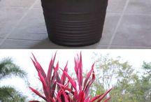 dézsás növények