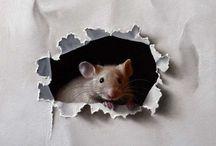 мыши декоративные