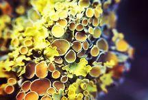 Sienet, jäkälät, ym.