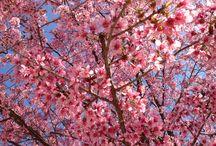 รับลมหนาว ดอกไม้งาม ณ ภูลมโล ทับเบิก
