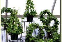 House Plants / by Denise Thomason