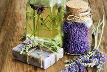 levandule - lavender