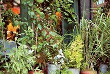 Outdoor herbs planting