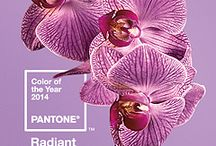 Radiant Orchid - Colour of the year 2014