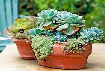 Succulents :D