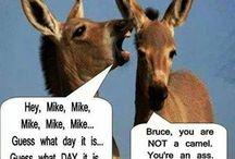Funnies / by KellyandJerad Bratton