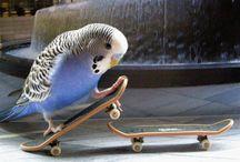 とり BIRD