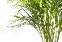 Pflanzen mit besonderen Wirkungen