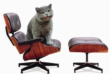Eames Cats / by Office Furniture Outlet