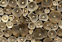 Who's got Shrooms? / by Nic Adler