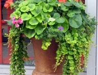 Container gardening ideas / by Mary Hernandez