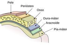 Estudos sobre o cérebro e neurociências.