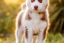 dogs mimi