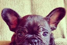 Hangs head: cute animals