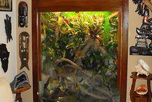 terrarium reptile