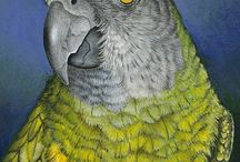 Senegal Parrots