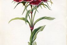 Botanical paintings&pictures