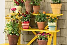 Escales plantes