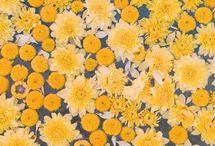yellow tmblr
