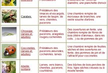 projet insectes