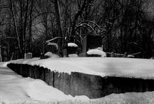 My Photography / by Taina Chadwick-DeShon