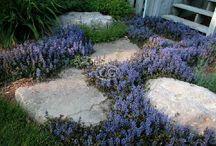 Bee-friendly Garden or Balcony plants