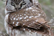 Creatures~ Owls / by Stacey Dean