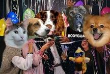 Happy New Year Pets!