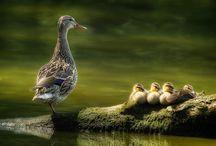 Wildlife Photography / Wonderful wildlife photography found on the web :)