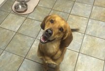 My dog Browning!
