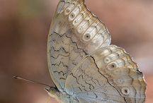 Бабочки , стрекозы , жуки