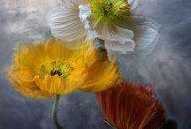 çiçek sanatı