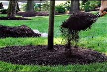 Healty Lawn Care / Tips for taking care of your lawn using Eco-frinedly methods. Dom's Landscaping winter mulch advantages. As the ground goes through the freezing and thawing cycles that occur during the winter, it can heave plants and bulbs out of the soil, damaging their roots and making the stressed plant vulnerable to disease later on.   Call to schedule at 516.488.6653.